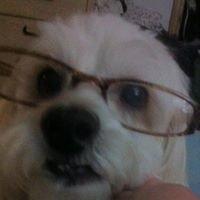 Doggie Details, Pet Grooming