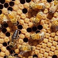 Granite Belt Honey