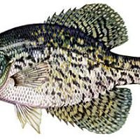 A & R Crappie Jigs