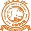 Golden Retriever Rescue in Nebraska