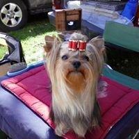 Cyndi's Professional Pet Grooming