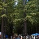 Cook's Valley Campground, CA