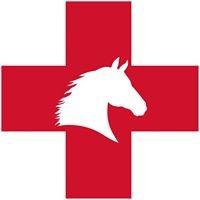 Ambulatory Equine
