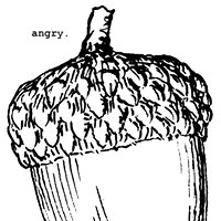 Angry Acorn