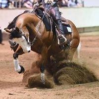 Believe Performance Horses