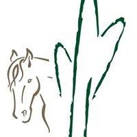 South Buckeye Equestrian & Events Center