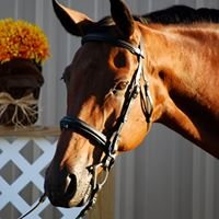 Starline Stables