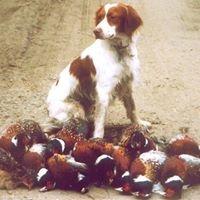 Brad Dysinger's Thorn Bottom Hunting