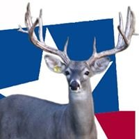 Whitetail Deer of Texas