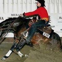 Reiner-Nic Performance Horses