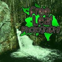 Free Leaf Photography