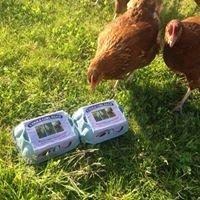 Coole Girl Eggs