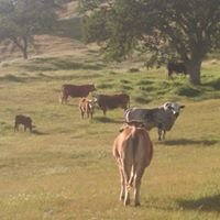 Nunes Livestock