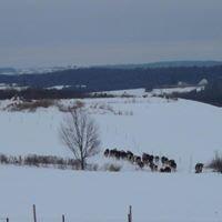 Morning View Dairy LLC