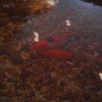 Greer Fish Bowl
