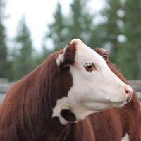 Two Creek Ranch Club Calves