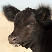 Collins Cattle Inc