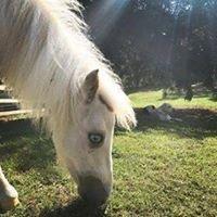 Helping Horses Alabama