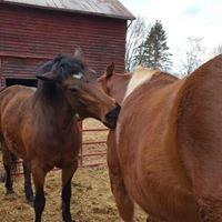 Easy Street Horse Rescue