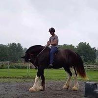 Positive Way Horsemanship, LLC