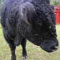 Zehr Ranch & Cattle Company