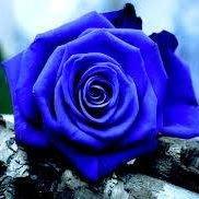 Blue Rose Garden Design LLC