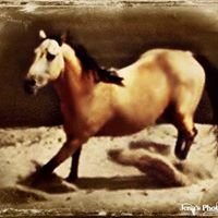 DosCowgirls Horse Tack & Western Store