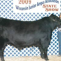 Berget Show Cattle