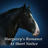 Stargazey Farms