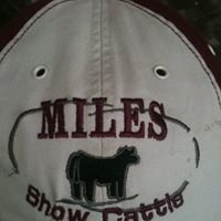 Miles Show Cattle