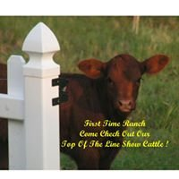 First Time Ranch & Beefmaster Cattle Co. Ltd.