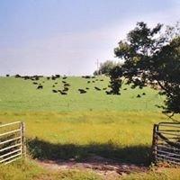 Quam Angus Farms