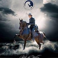 Hickerson Arabian Show Horses