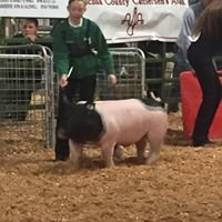 Lyons & Lyons Showpigs