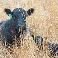 Montgomery Land and Livestock