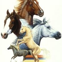 High Hill Haven - Horse Rescue, Inc.