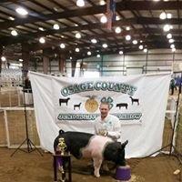 3R Show Pigs