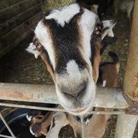 Heartsong Farm