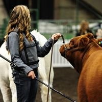 Diamond C Ranch Limousin
