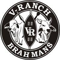 V-RANCH BRAHMANS