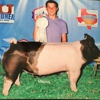 Mulligan Show Pigs