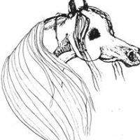 Pointview Arabians
