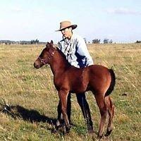 ASHVA YOGA (Yoga & Horses) Punta del Este