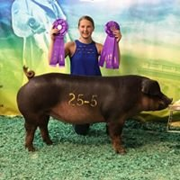 Harfst Showpigs