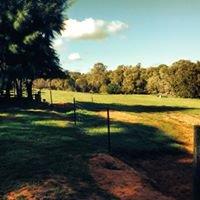 Willow Brook Farms