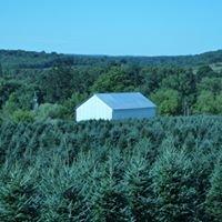 Pinecrest Tree Farms, LP
