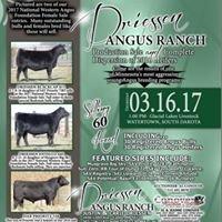Driessen Angus Ranch