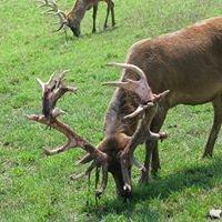 Rolling-Hills Red Deer Farm