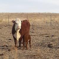 Castillo Cattle Ranch