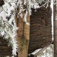 Cabanes dans les arbres Entre Terre et Ciel